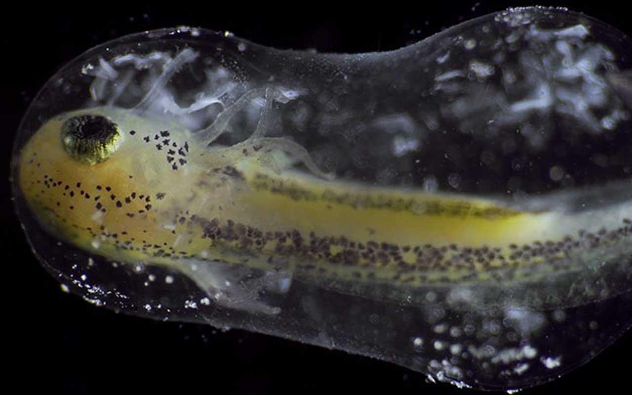 film, Dutch, newt, salamander, life, animal, organism
