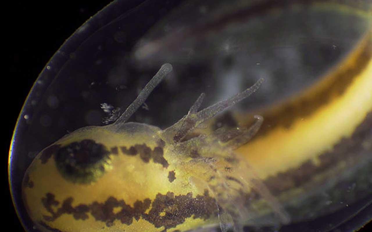 newt, salamander, facts, organism, life, nature, photo