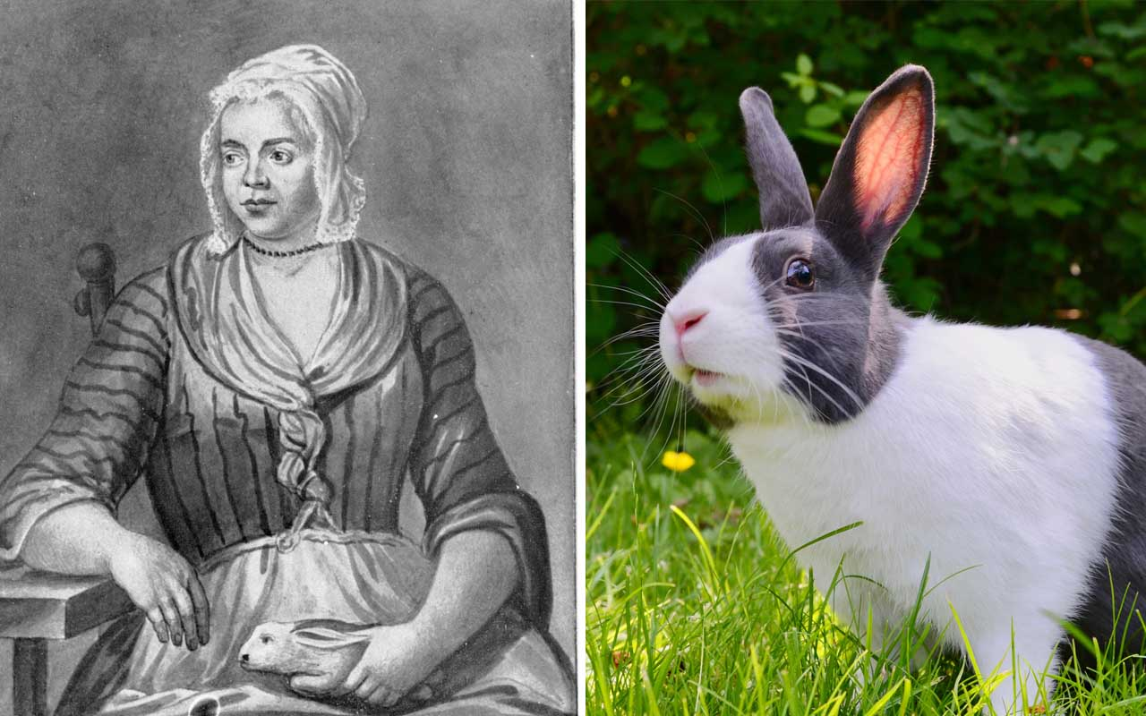 Mary Toft, rabbit, facts, Britain, life, history, random
