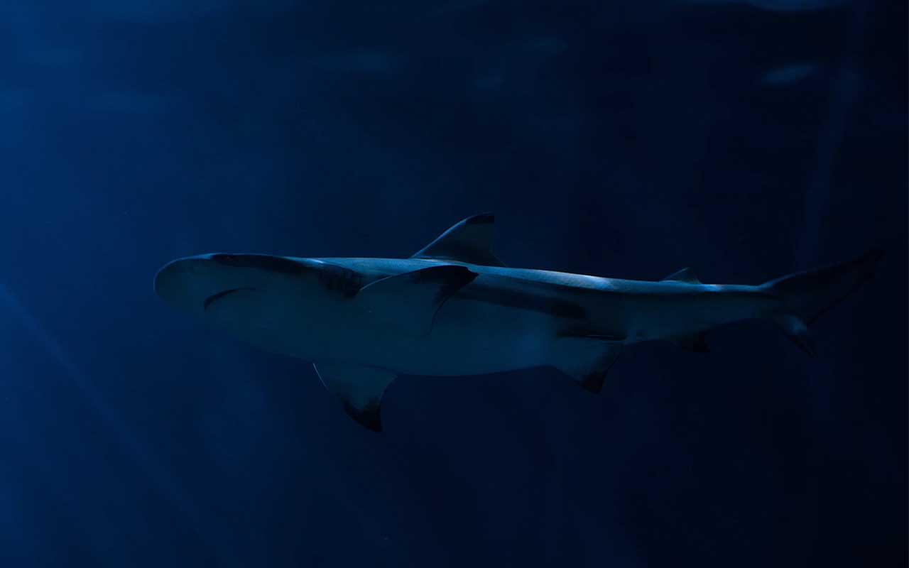 sharks, volcano, Kavachi, life, facts, nature, science