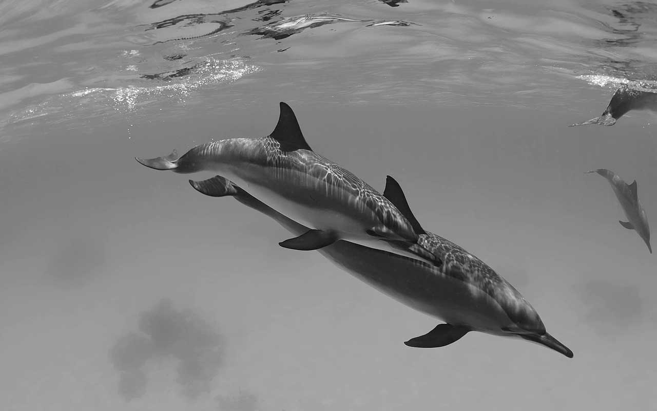 dolphins, life, nature, animals, facts, uplifting
