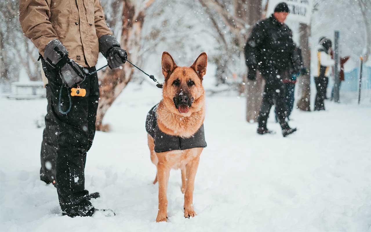 police, dog, facts, animals, uplifting