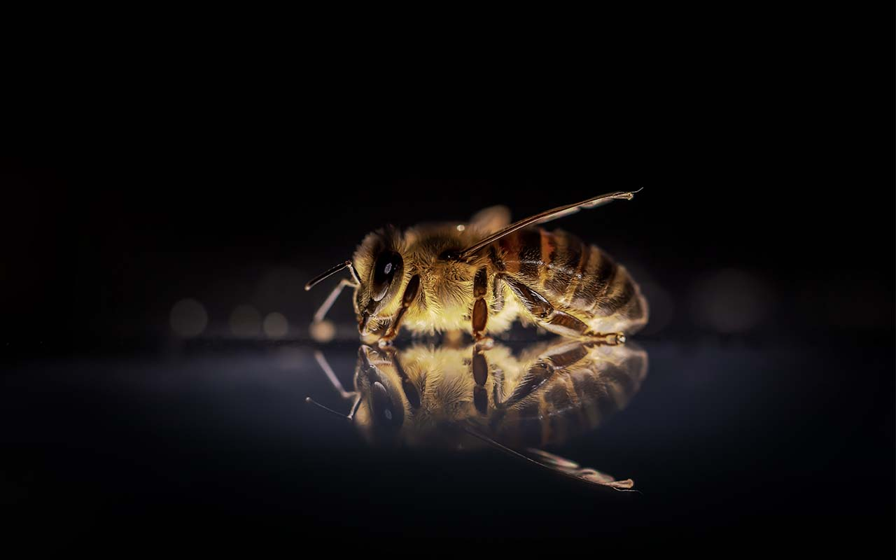 bumble bee, animals, abilities, life, facts, nature, life