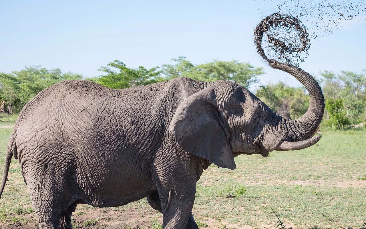 elephants, trunk, life, abilities, strength, survival, wild