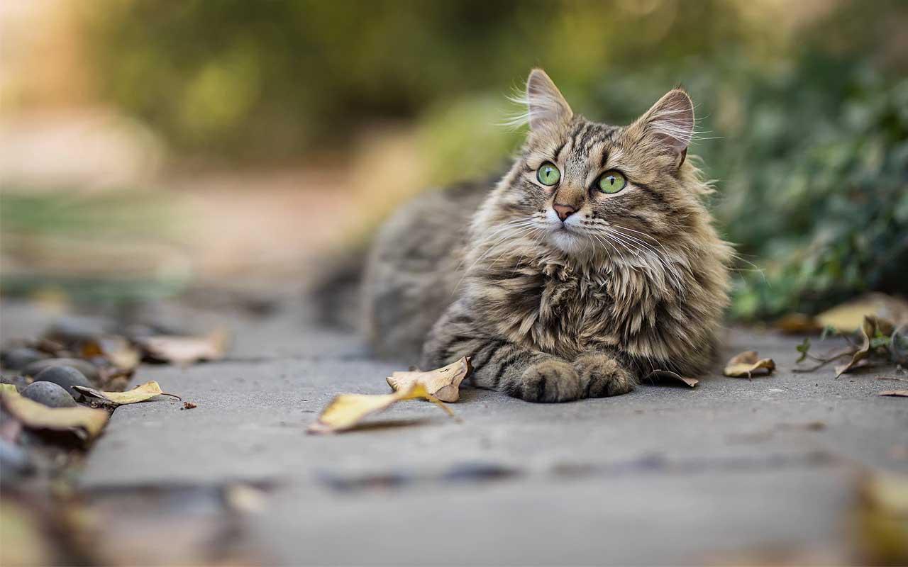 cat, feline, found, facts, animals, nature, England