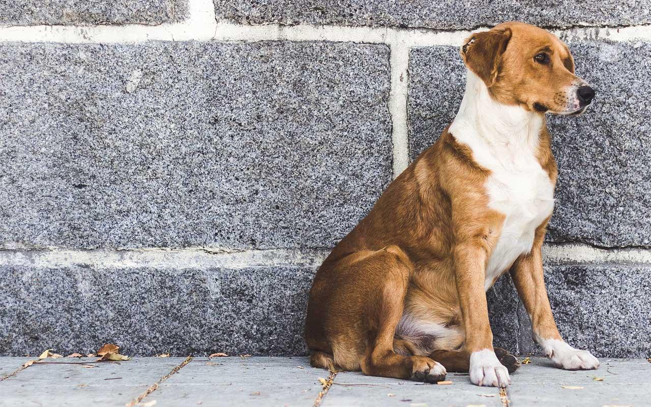 pets, ban, UK, California, facts, smile, life, animals
