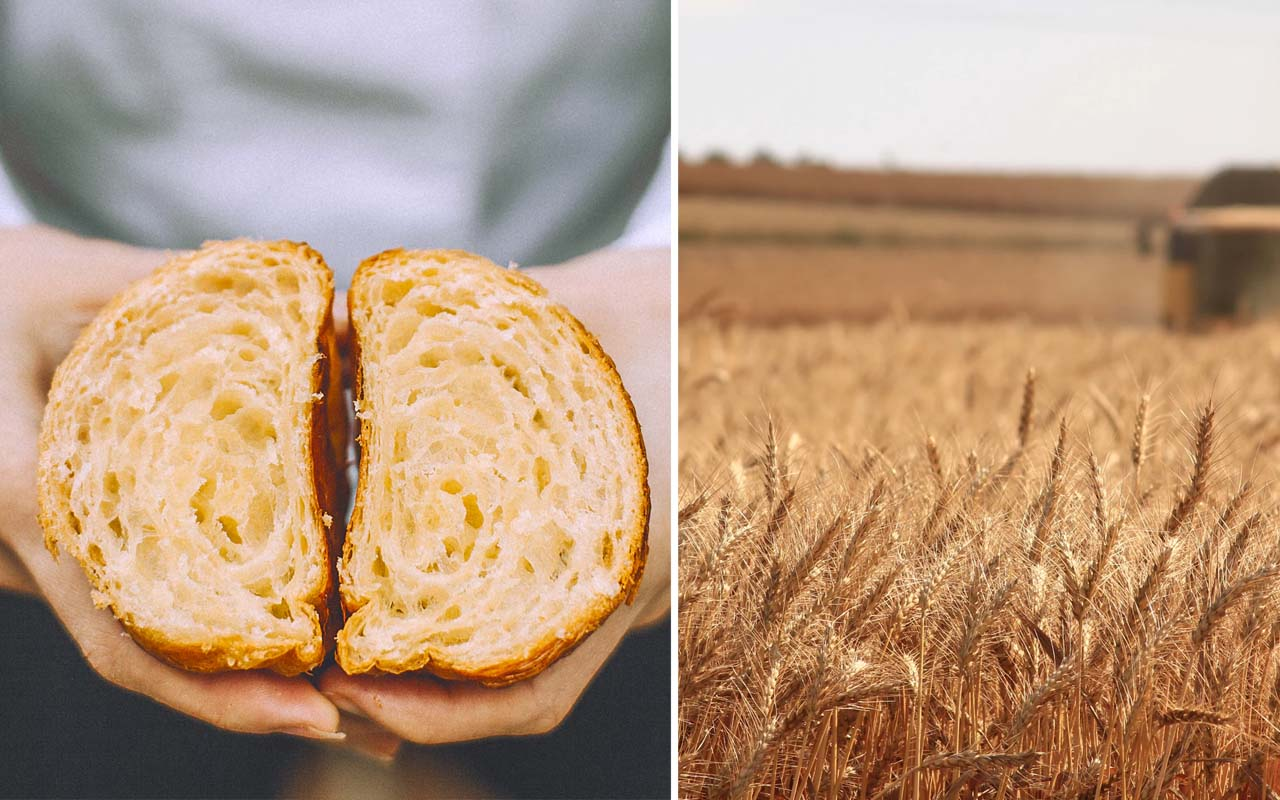 harvest, whole grain, foods, facts, wheat, bread, disappear