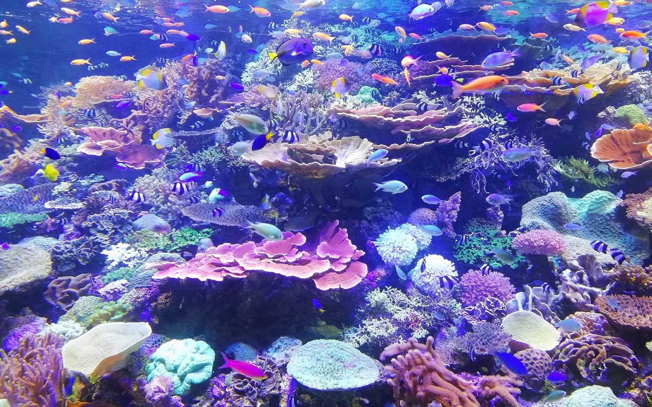 coral reefs, ocean, planet, Earth, facts, life, people
