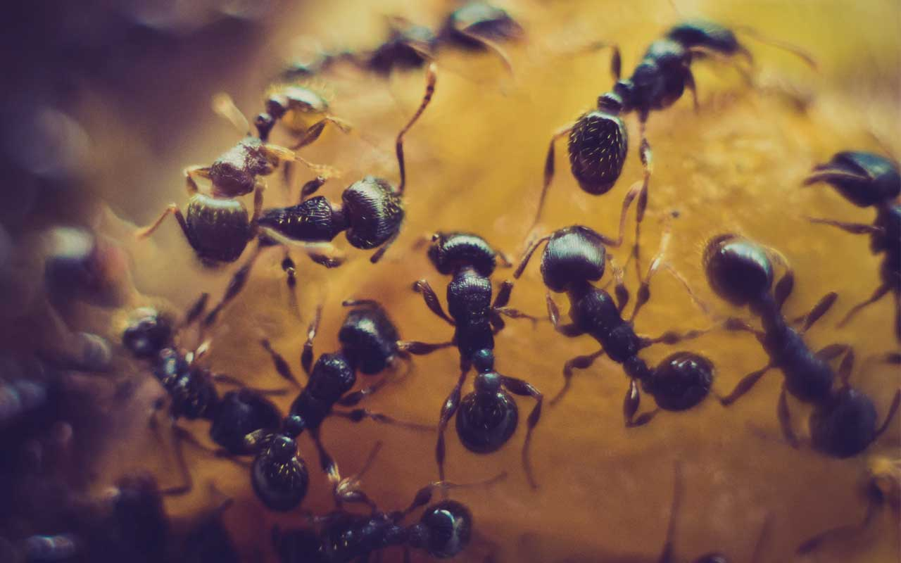 ants, species, Iceland, Antarctica, facts, friends, party, family