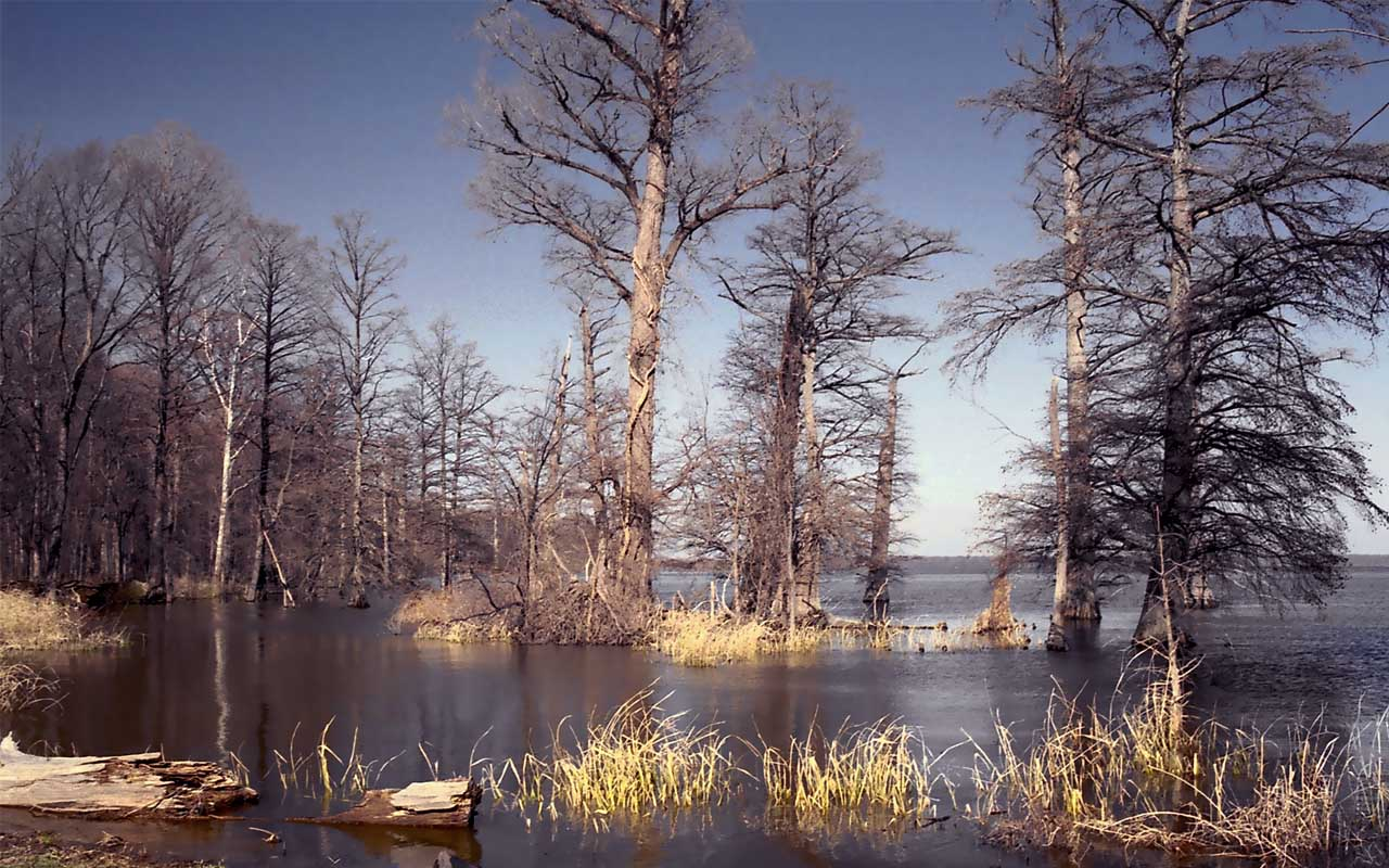 Reelfoot Lake in Tennessee, facts, unbelievable, life, people, science