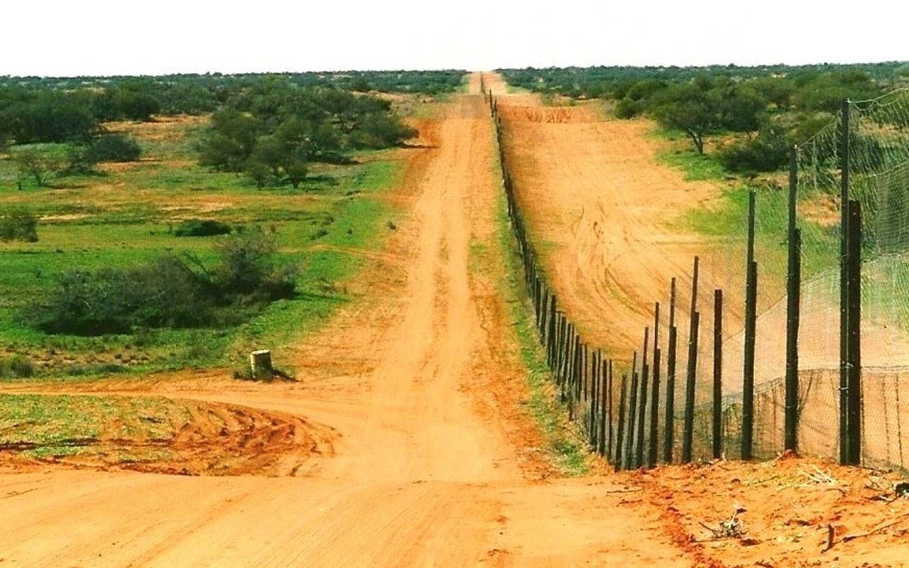Dingo Fence, Australia, Queensland, facts, unbelievable, life