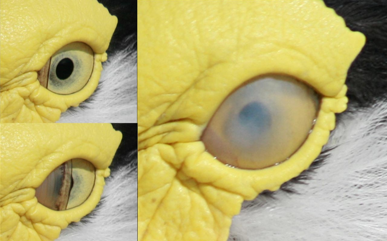 third eyelids, animals, birds, nature, mammals, facts, science, evolution, smart features