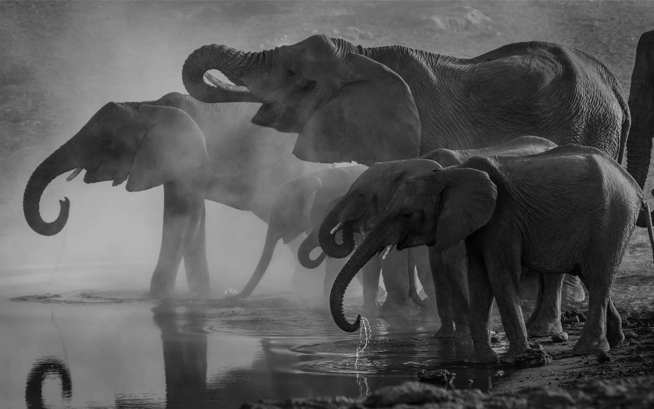 elephants, smell, water, trunk, facts, nature, life