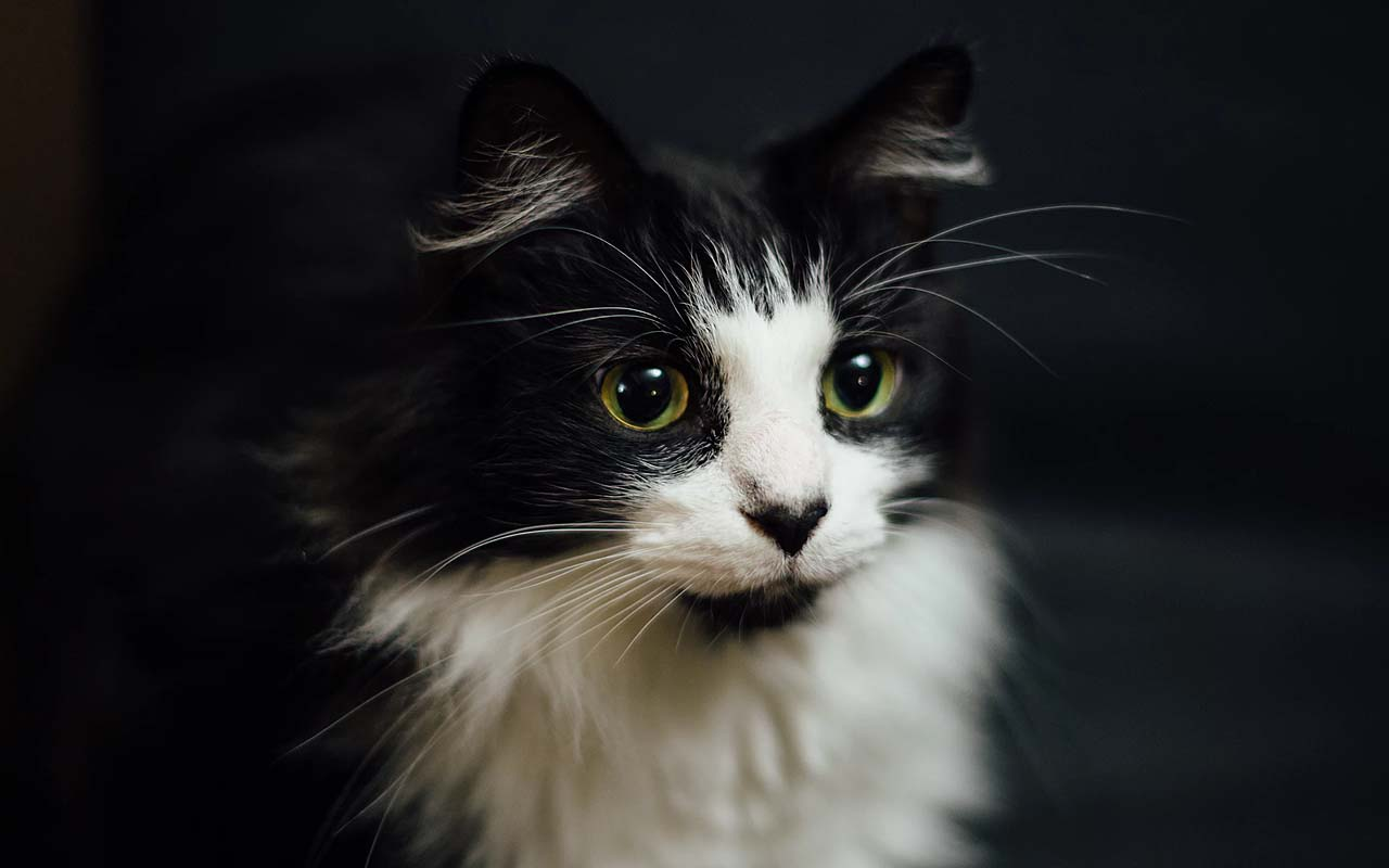 cat lovers, people, dog, facts, surprising, science