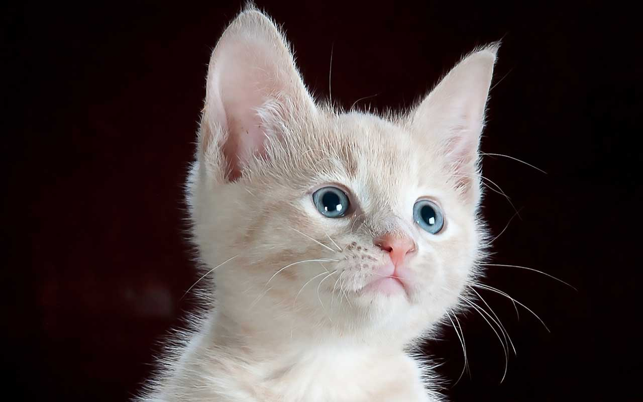cats, understand, emotions, language, reveal, life, animals, humans