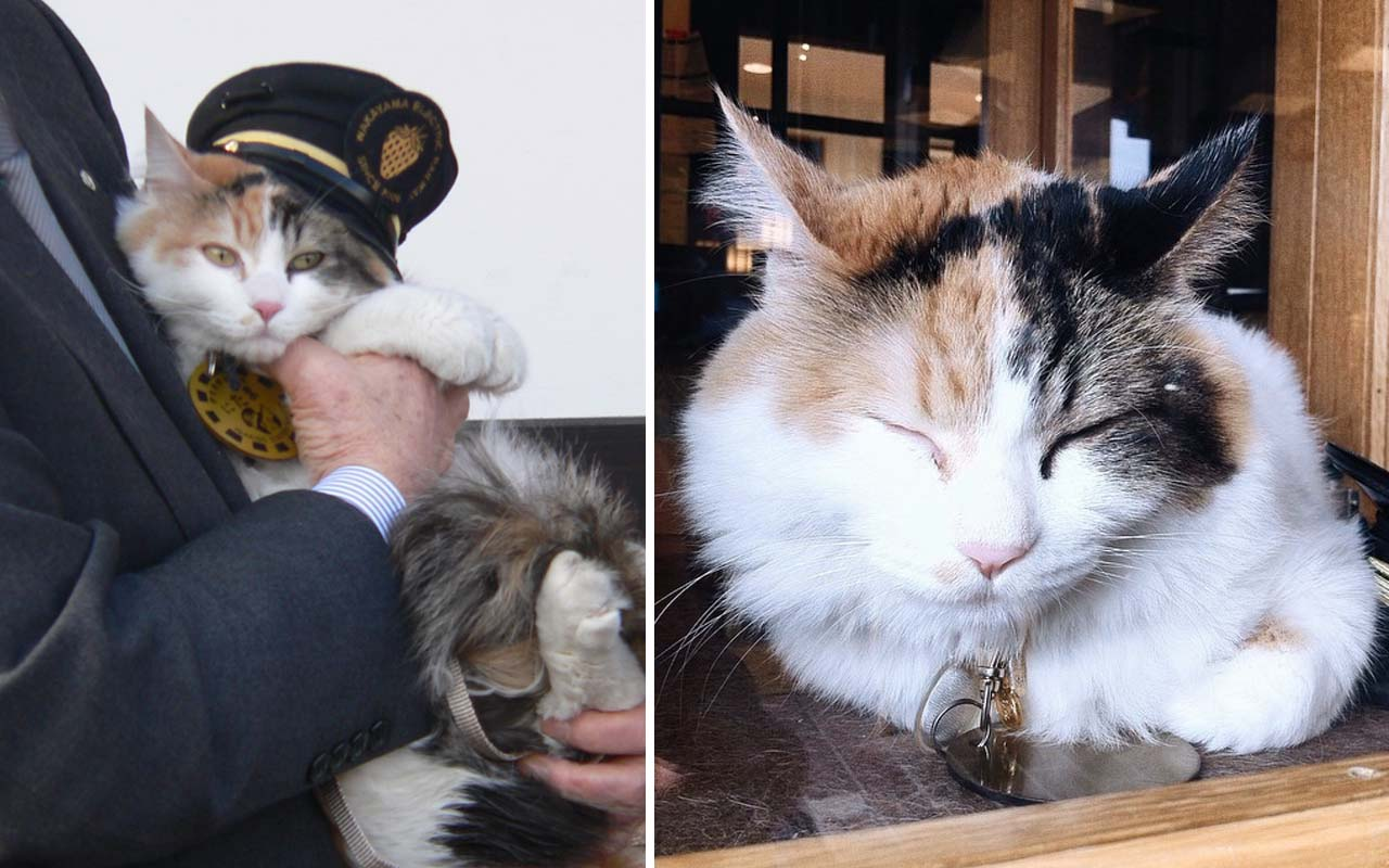 facts, amuse, cat, animals, nature, life, people, Japan, train, station