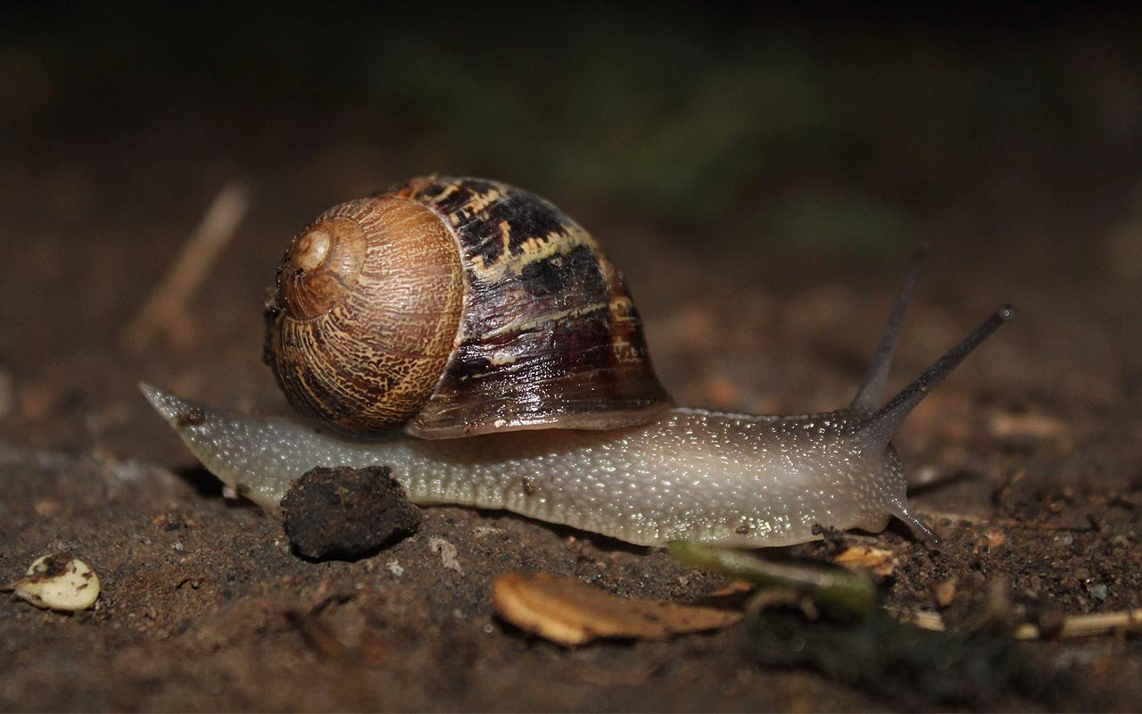 sleep, years, facts, nature, snail