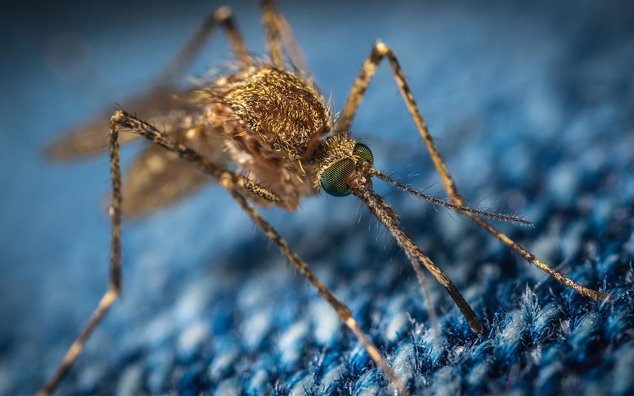 mosquitos, facts, science, blood type, nature, hiking