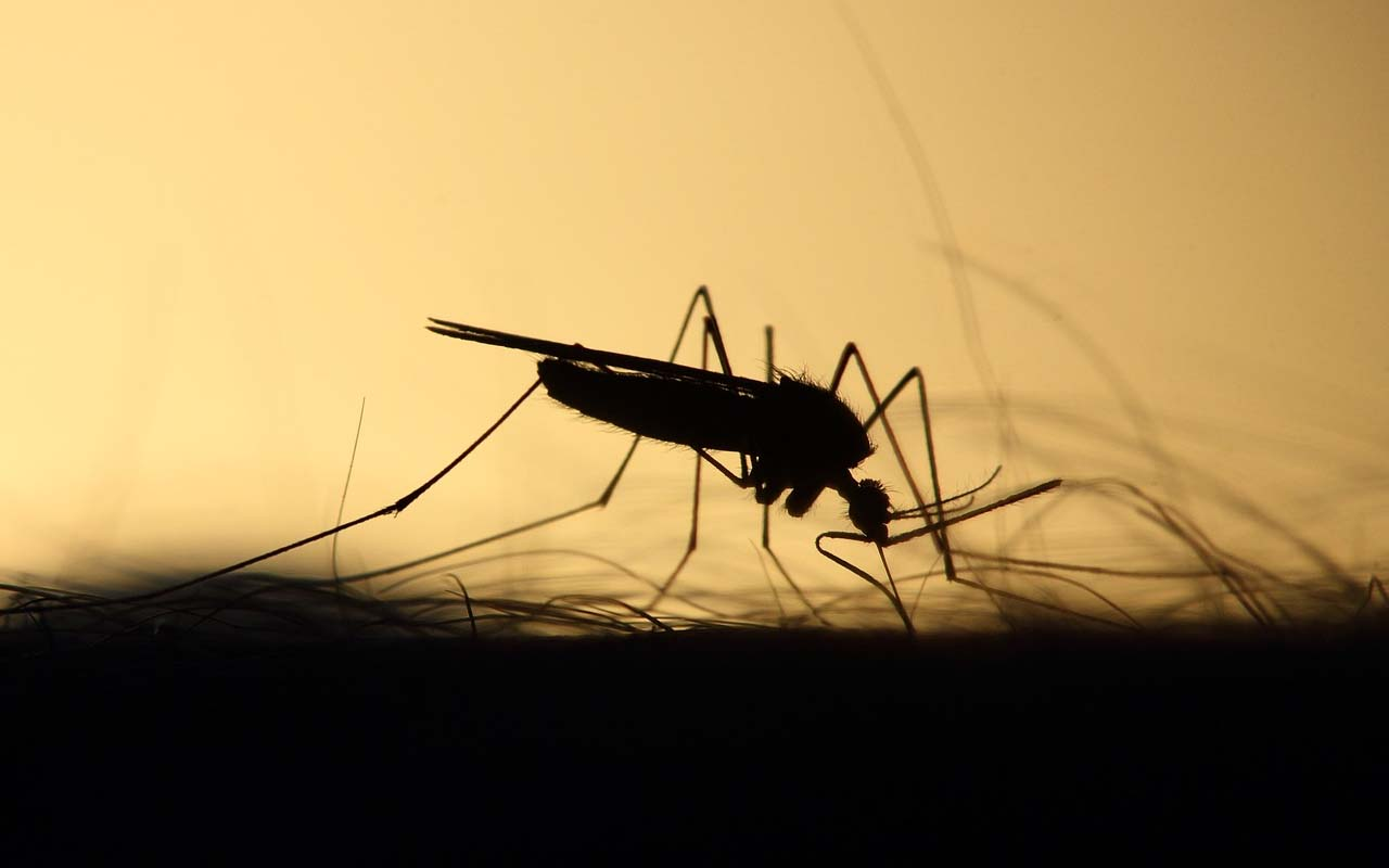 mosquito, foods, color, clothes, facts, blood type