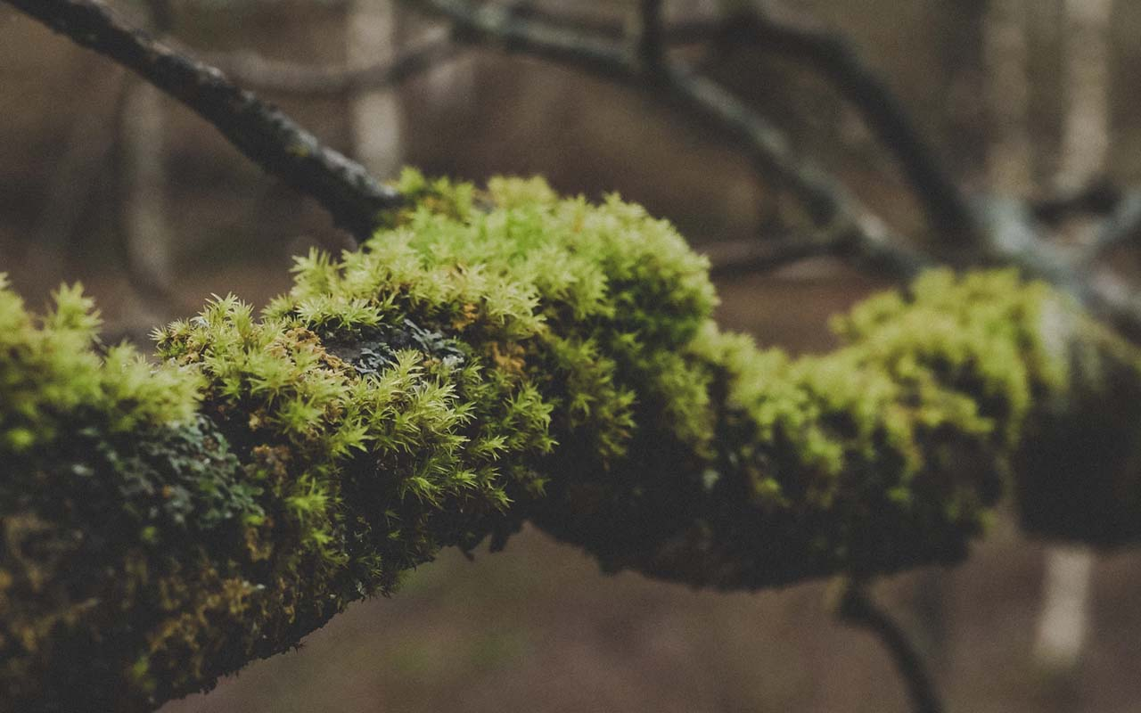 moss, wilderness, nature, facts, life, people, survival, compass, sun, direction