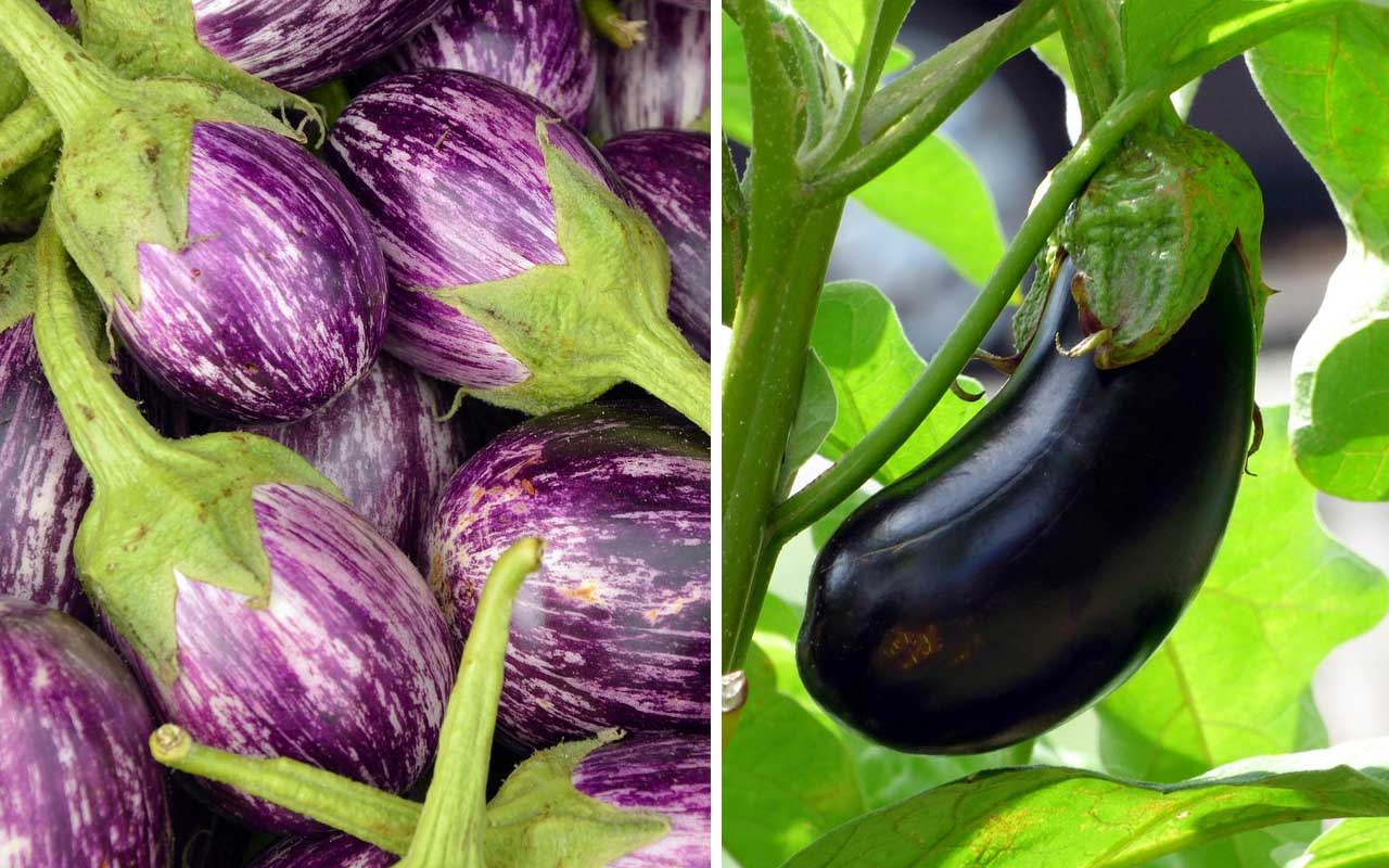eggplant, foods, vegetable, berries, nature, facts