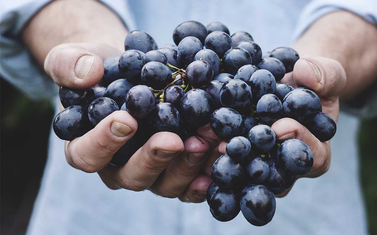 grapes, berries, life, foods, facts, nature, vegetables