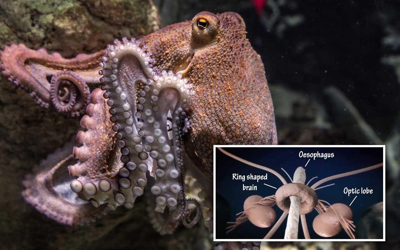 octopus, facts, life, nature, false, true, ocean