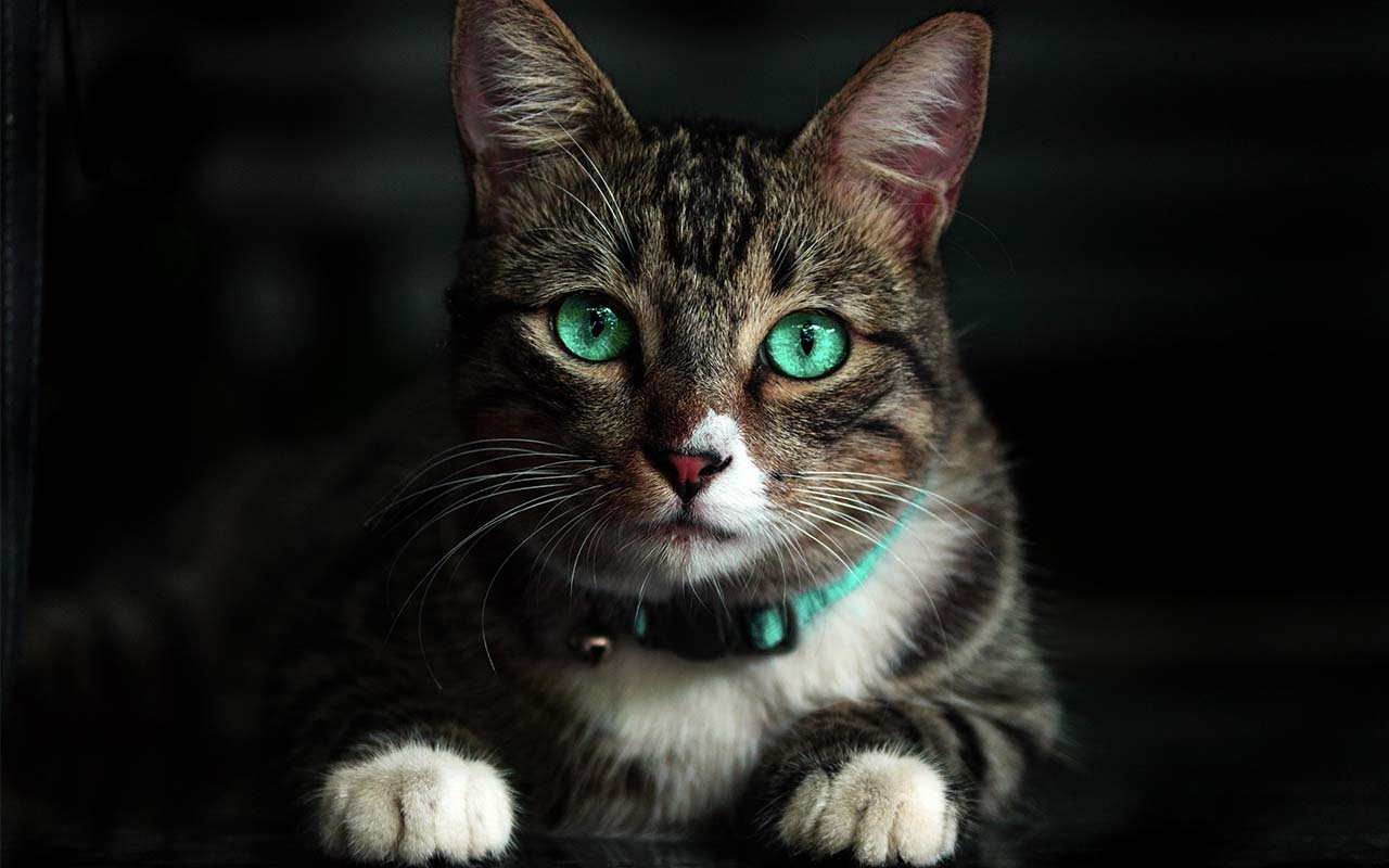 cats, love, people, relationship, felines, friends, pets