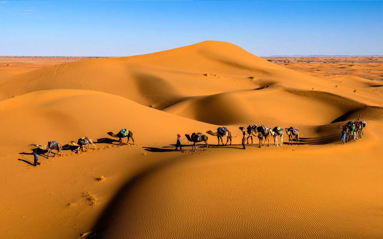 Saudi Arabia, camel, sand, desert, facts, science, life, people