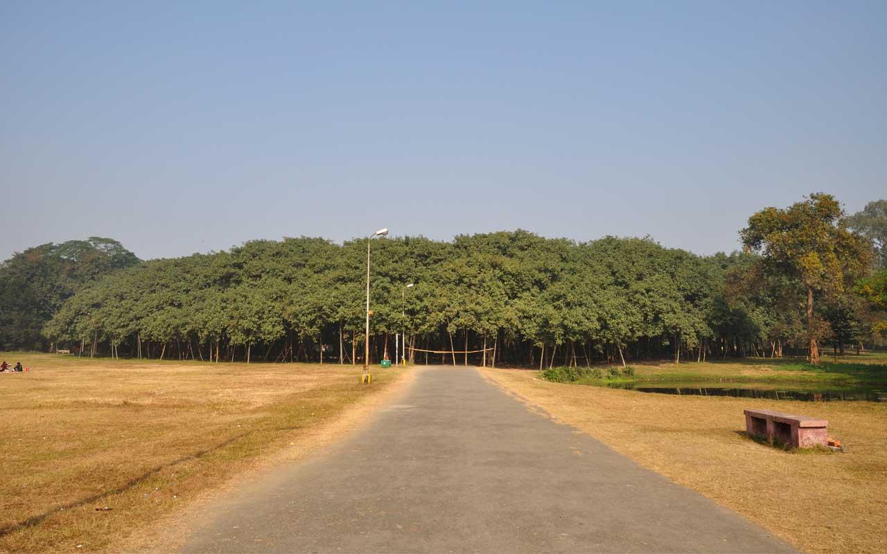 banyan tree, Kolkata, India, facts, travel, Asia, facts, science, nature