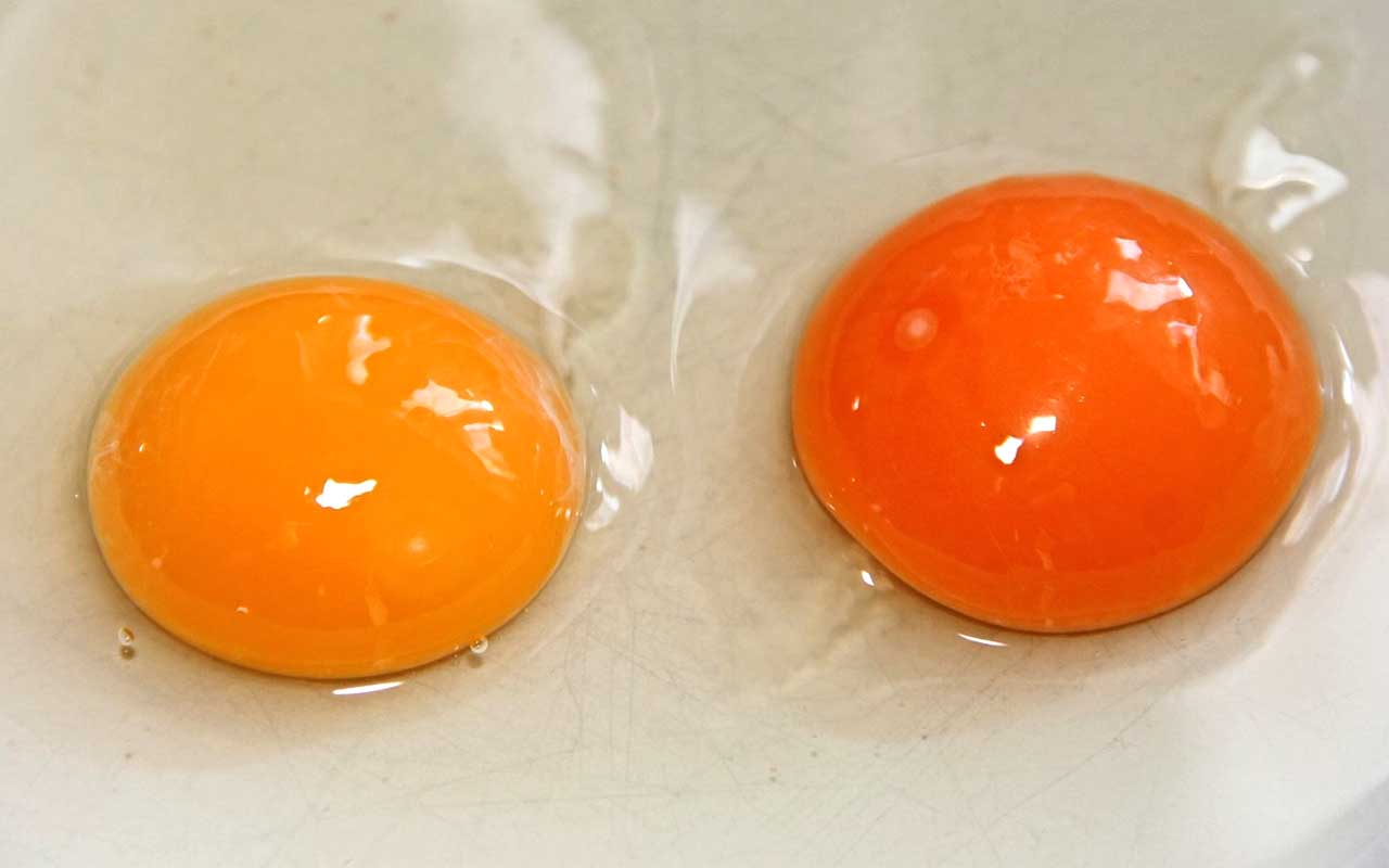 egg yolk, color, facts, people, life, science, nutritional value