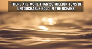 oceans, life, earth, planet, travel, adventure, facts