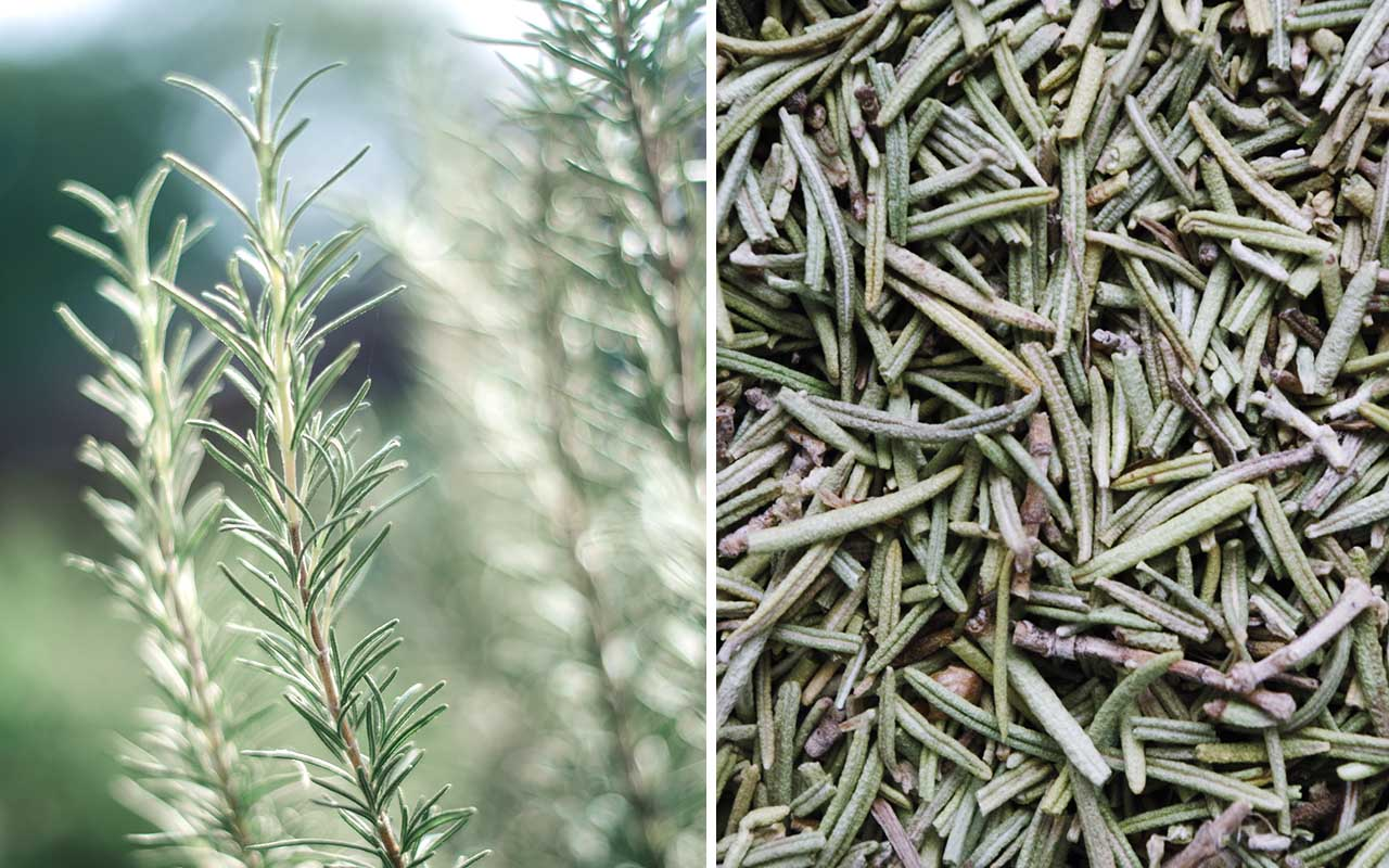 rosemary, spice, facts, cooking, baking, kitchen,