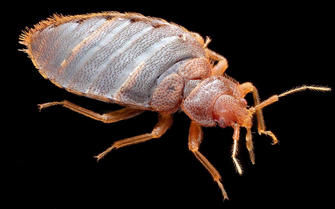 bed bugs, dinosaurs, facts, people, science, study