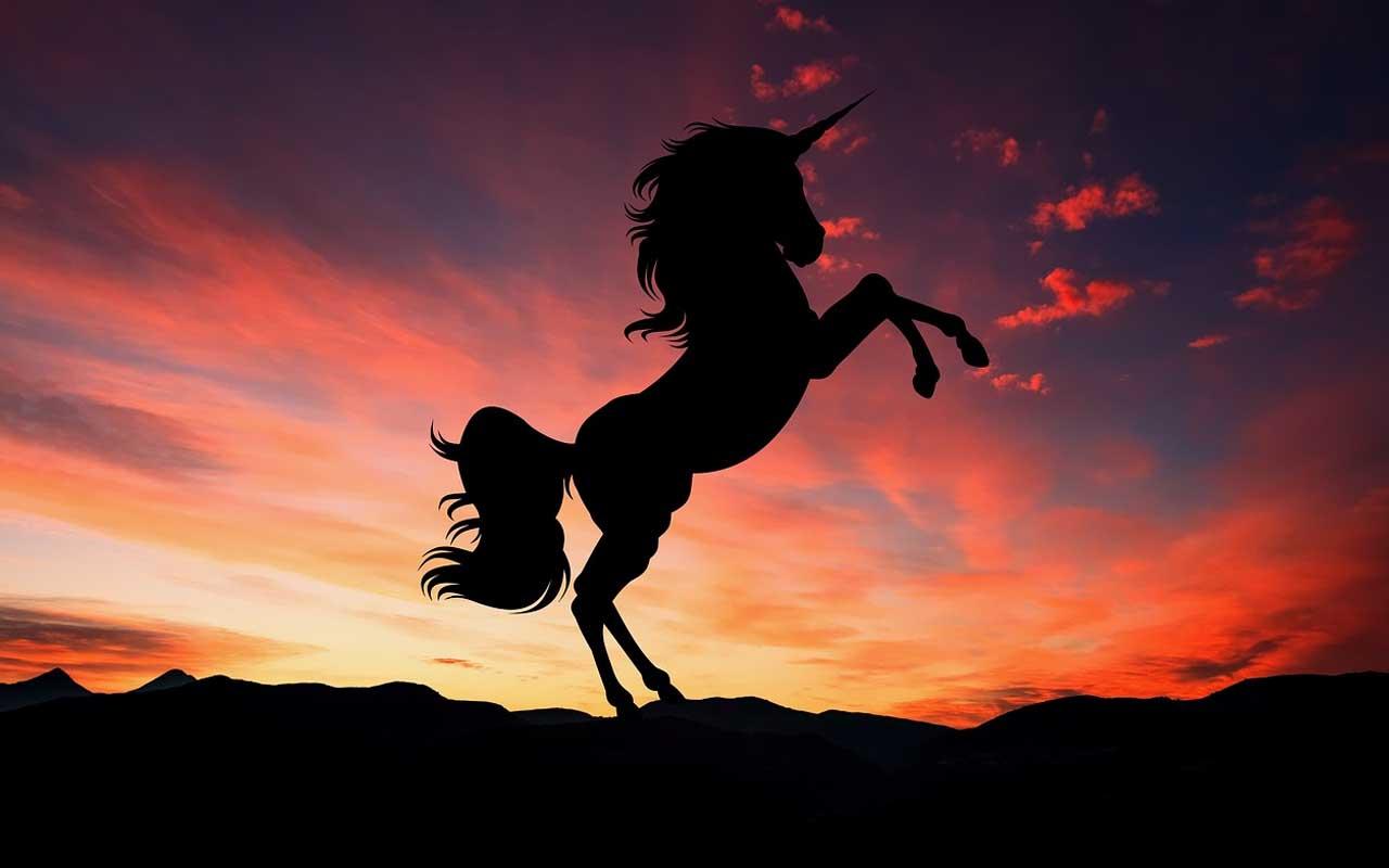 unicorn, Scotland, national animal, life, people, amazed