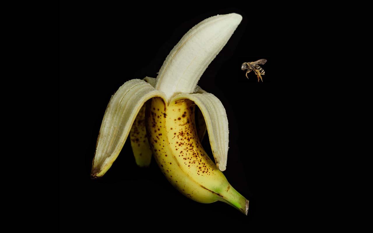 bananas, bees, facts, people, food, life, interesting, conversation