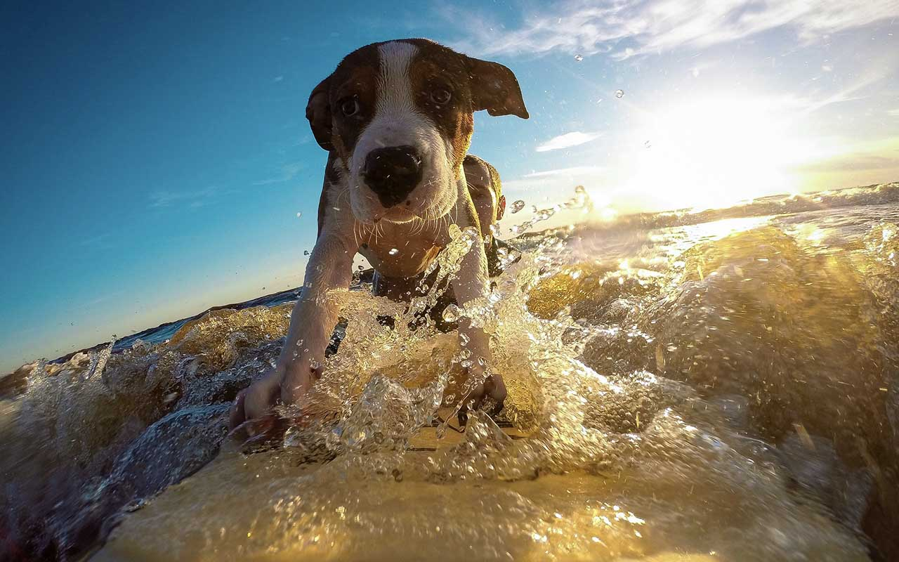 feel good, facts, dogs, surfing, beach, animals, smile