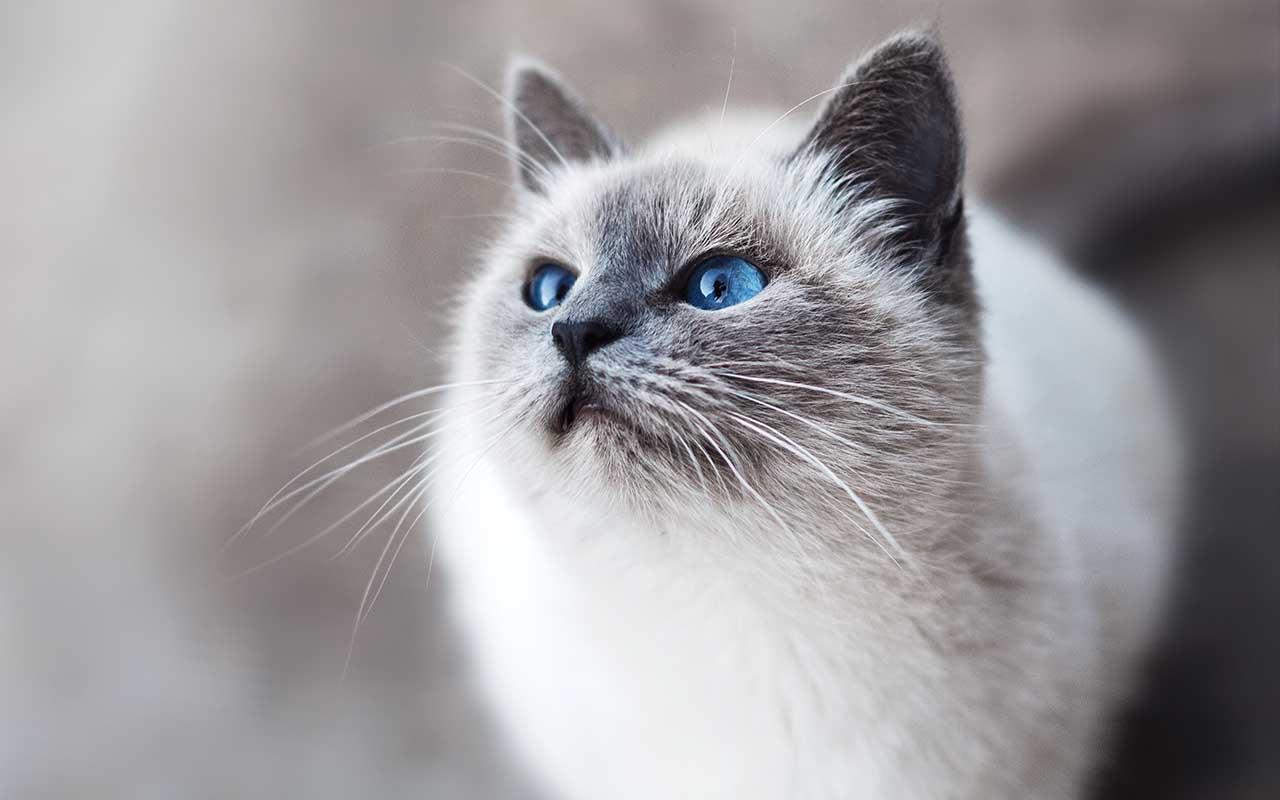 cats, kitten, food, animals, hunting, Earth
