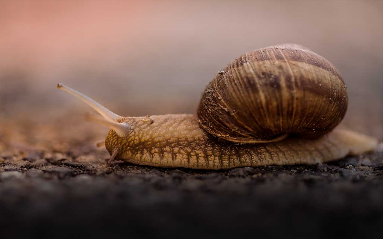 snail, nature, Earth, rotation, facts, science, more amazing