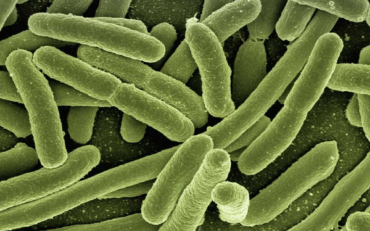bacteria, life forms, life, animals, virus, people, science, microscope