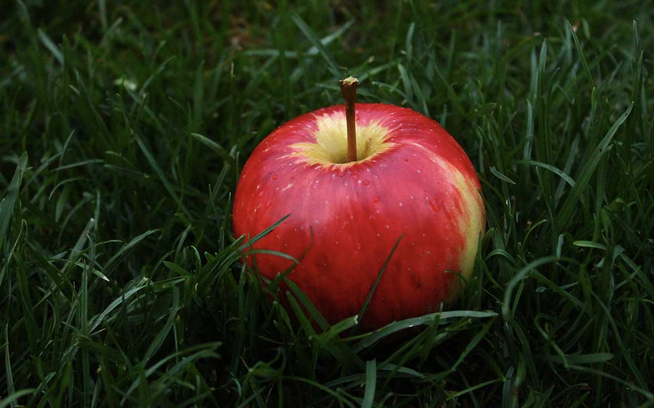 apple, ancient Greece, facts, life, history, men, women
