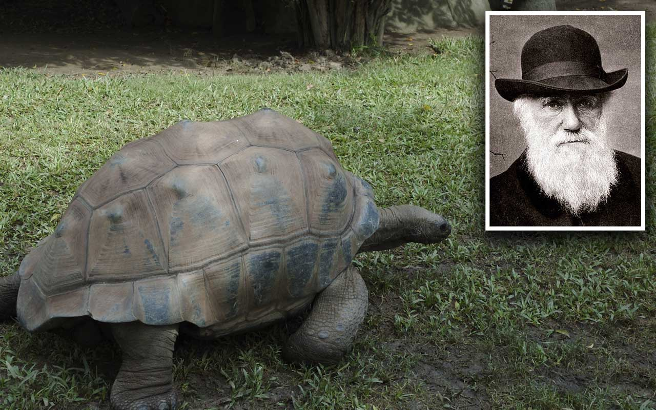 Harriet the tortoise, Steve Irwin, Charles Darwin, history, unreal, facts, people, travelers