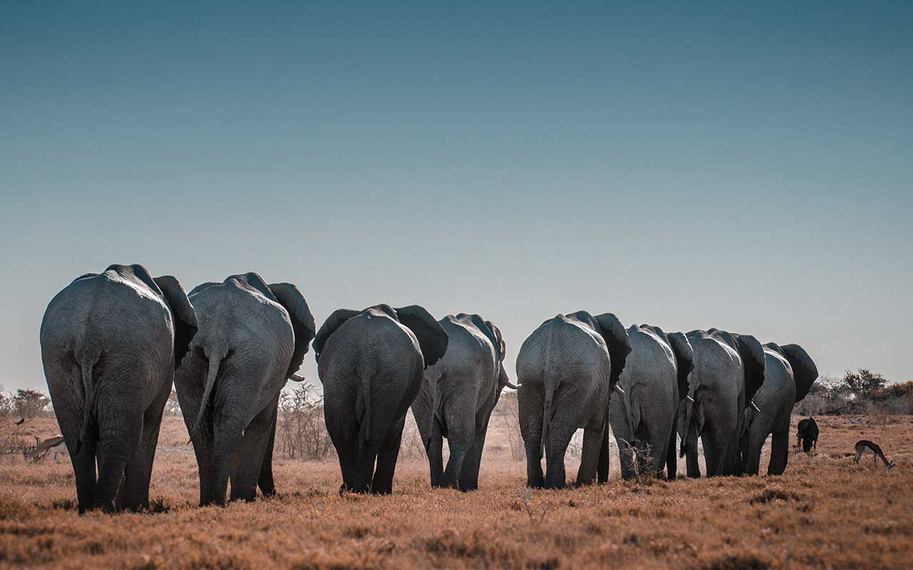 elephants, bees, facts, animals, Africa, herd, travel