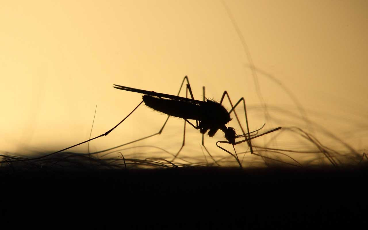 mosquito, facts, electronic music, EDM, Skrillex