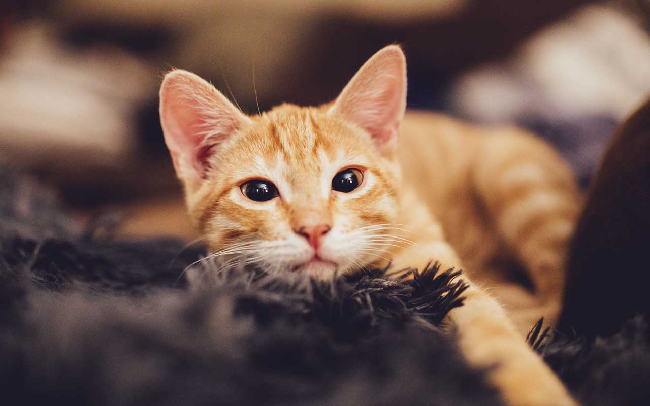 Mayor Stubbs, Alaska, facts, cats, life, people, weirder, animals, nature, United States