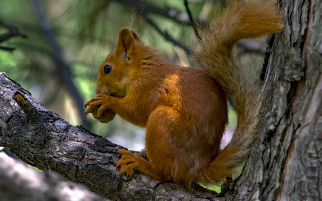 squirrels, power lines, trees, facts, animals