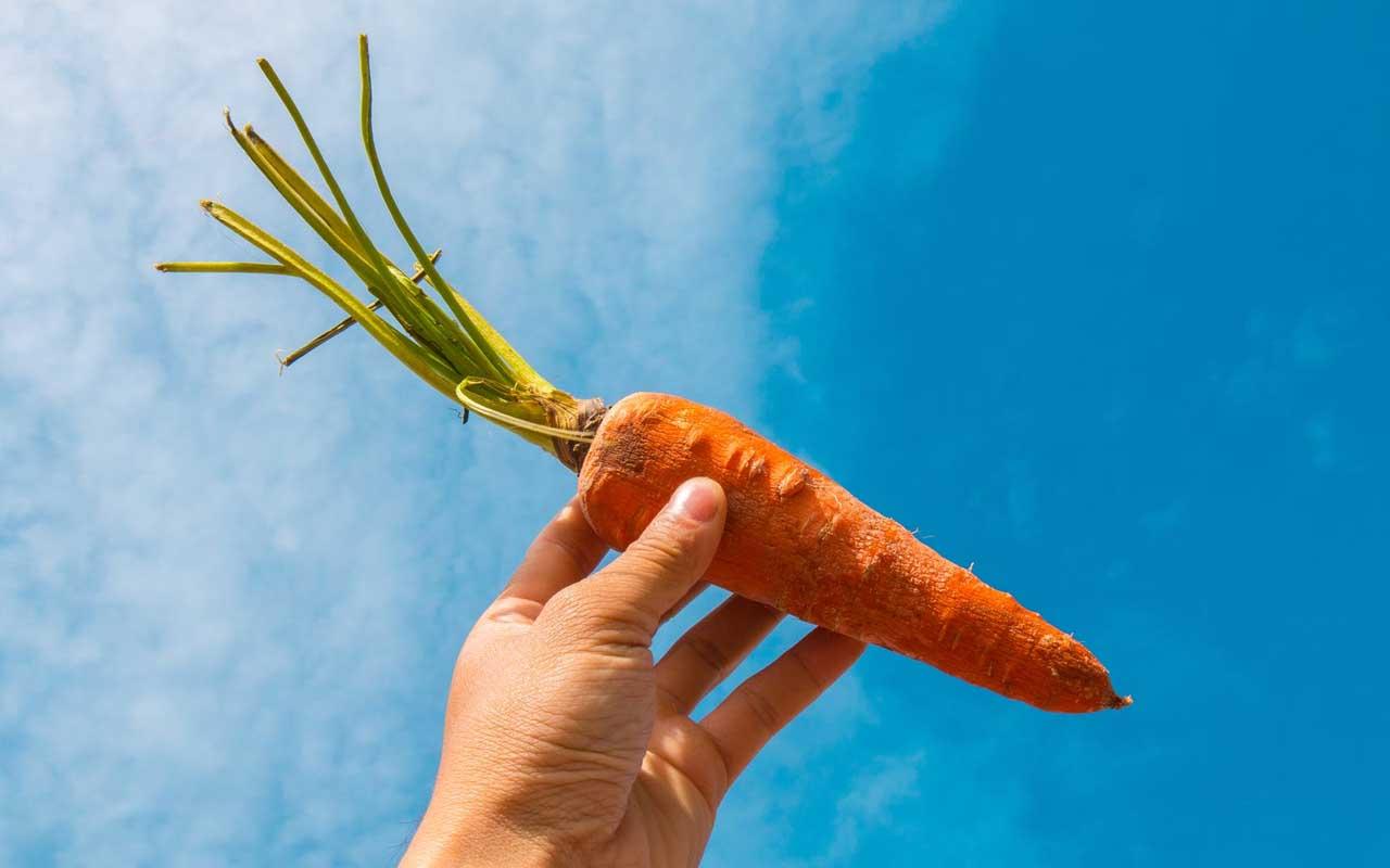 carrot, orange, color, turn, life, food, vegetables