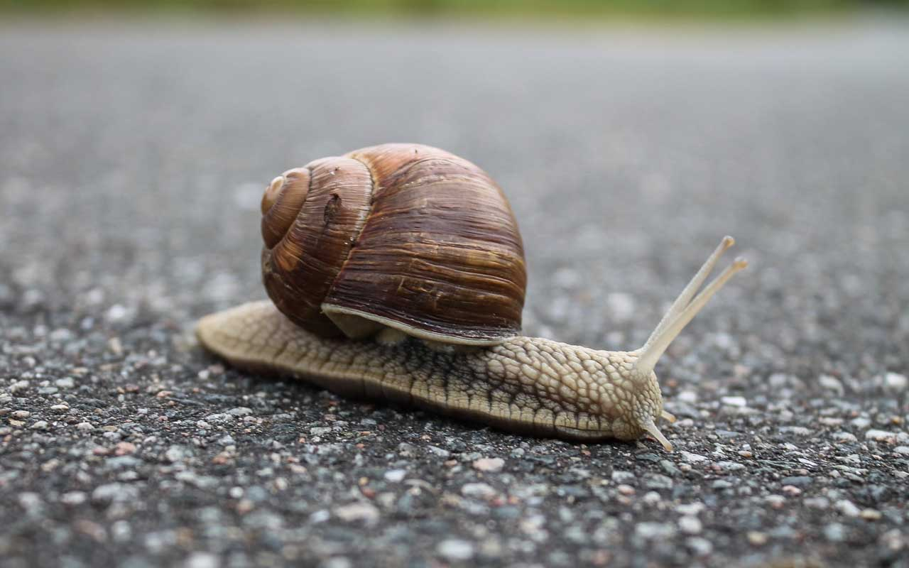 snail, facts, animals, life, teeth, science