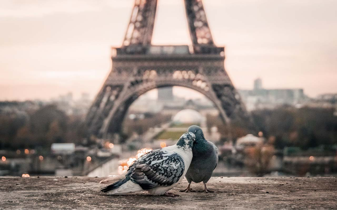 France, time zone, facts that, pigeons, Russia, United States