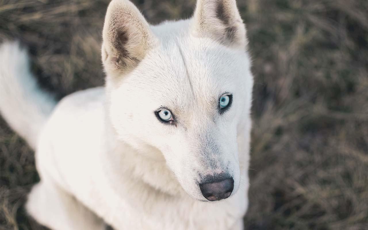 dog, dogs, wonder, facts, animals, nature, trustworthy, mans best friend, humans